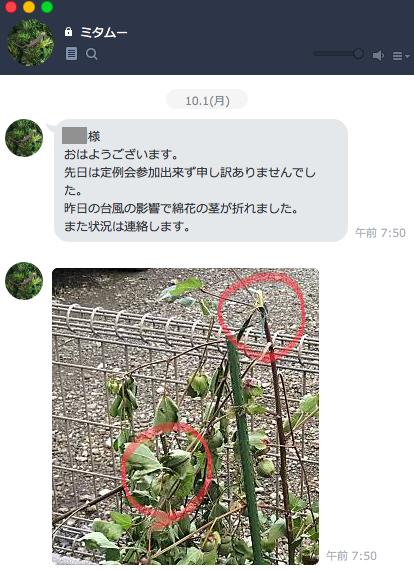 ミタムーからLINE