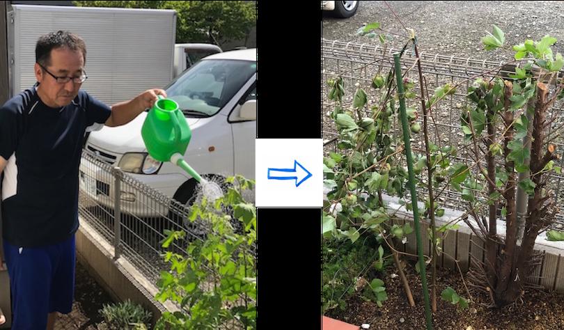 台風でポッキリ折れた茎