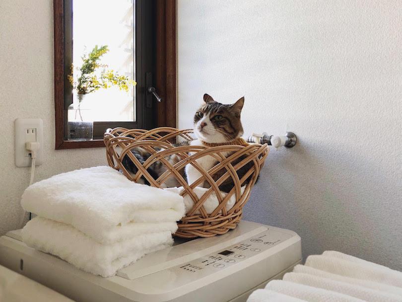 くるり(愛称:くる兄)は、靴教室の看板猫