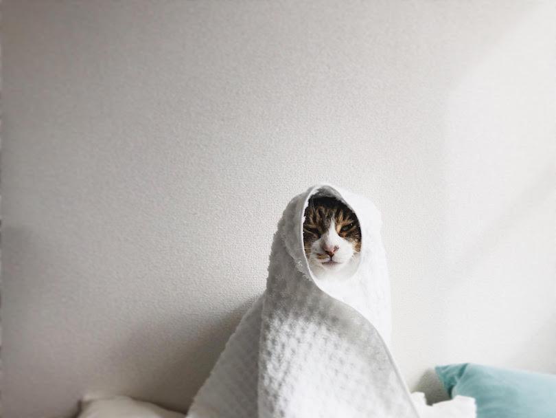 白いタオルに包まる
