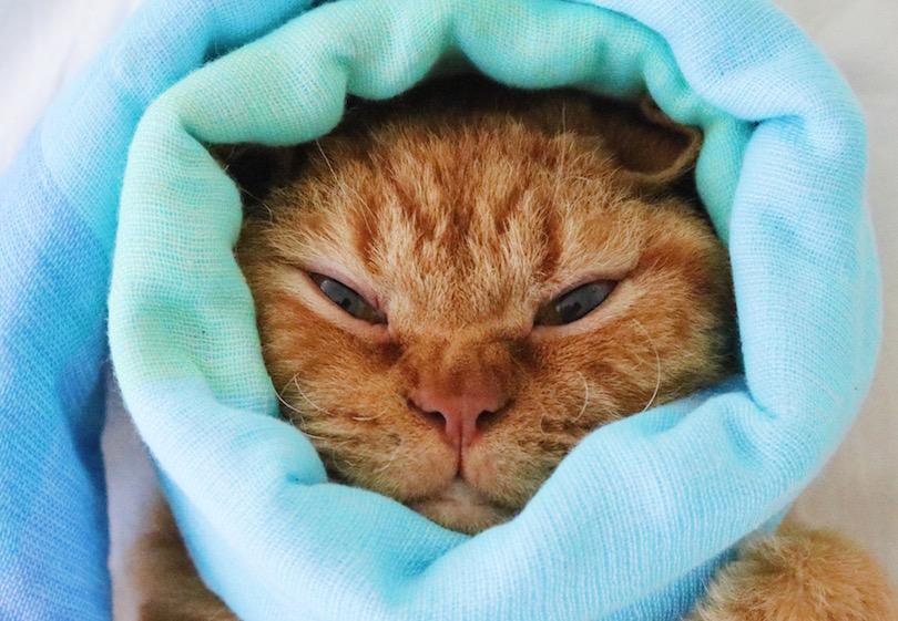 お気に入りのタオルに包まる様子