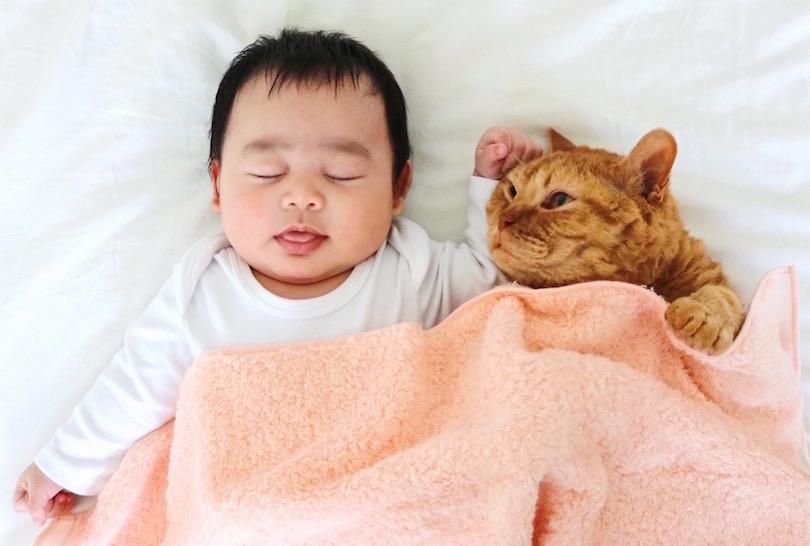 2月22日は猫の日!猫×タオルによる「もふもふフォトギャラリー」をお届け!