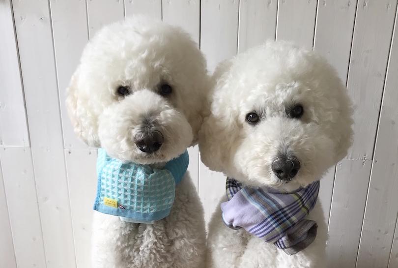 11月1日は犬の日!ワンちゃん×タオルによる「もふもふフォトギャラリー」をお届け!