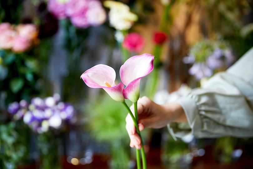 カラーの花言葉は「華麗なる美」「乙女のしとやかさ」。