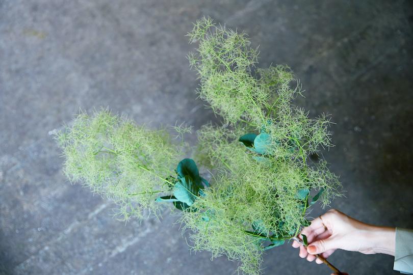 フワフワとした葉が特徴的なスモークツリーも、初夏が旬。
